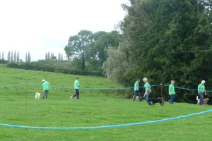 Hooligan Hounds Dog Obedience Training Demonstration